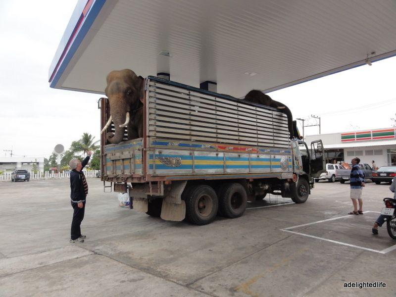 Elephant at Thai service station