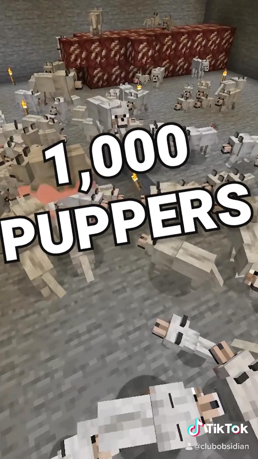 I Gave A Player On Our Minecraft Server 1 000 Pet Dogs Video In 2020 Minecraft Tips Minecraft Minecraft Videos