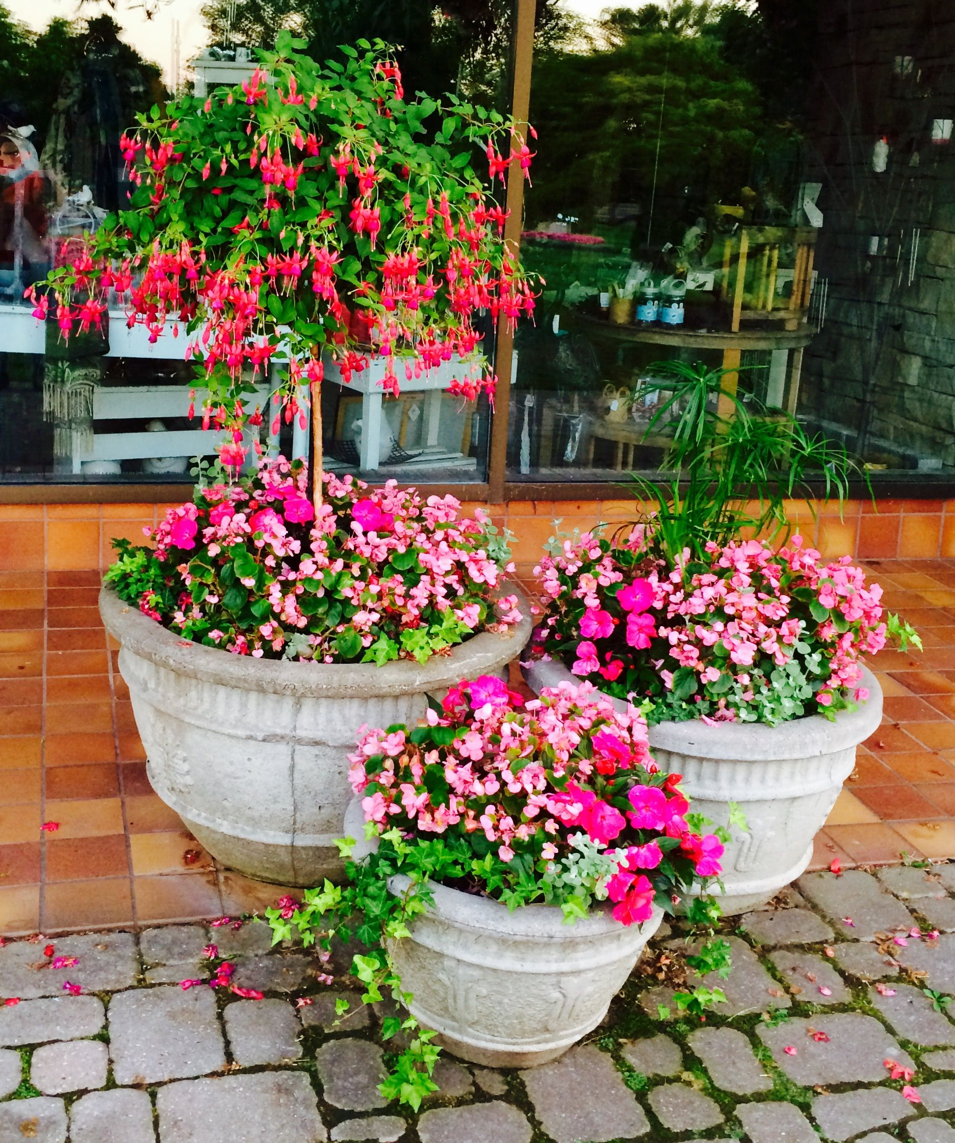 Fuchsia Hanging Basket With Pots Of New Guinea Impatiens(Painted Paradise