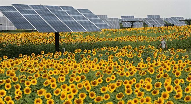 Solar Farm Lets Investors Buy Panels Solar Farm Solar Planting Sunflowers