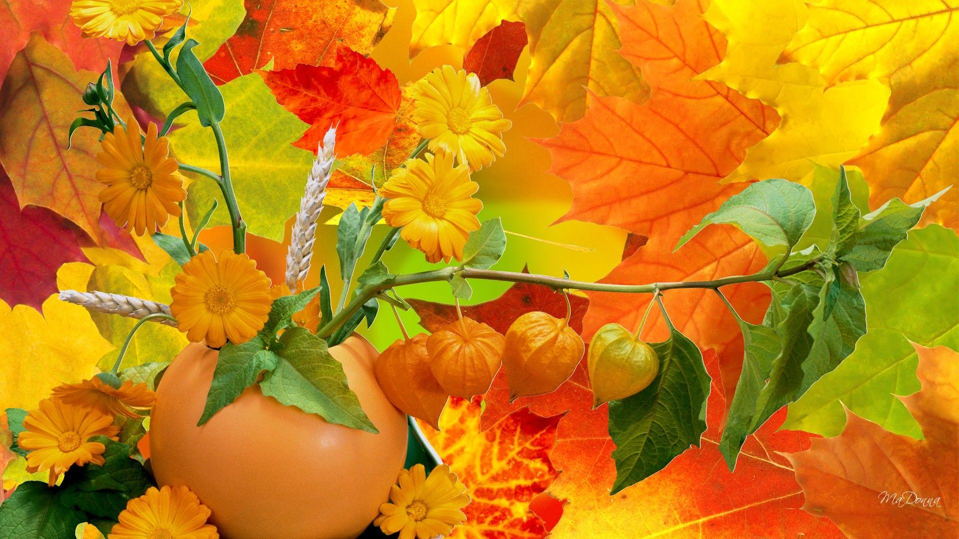 Wallpaper download free image search hd - Hd Abundance Of Fall Colors Wallpaper Download Free 60021