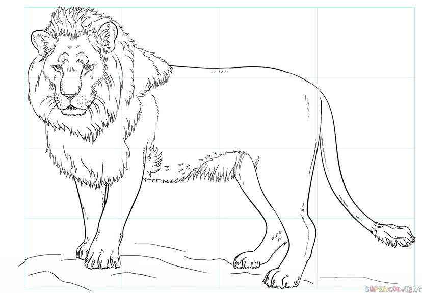 Lion head coloring pages Lion head coloring page practice free ... | 575x828