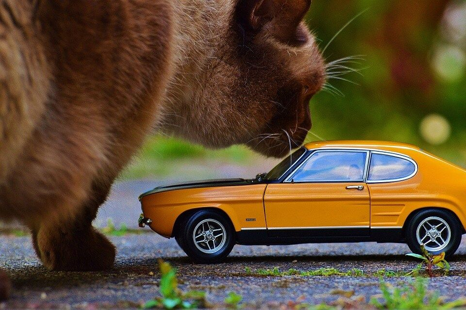 8 Tips How to Keep Cats Off Your Car? Pet health