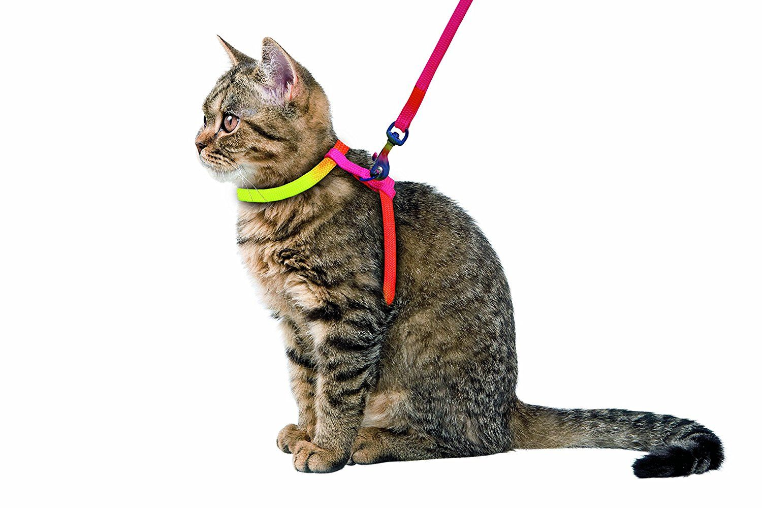 Kerbl Rainbow HarnessSet for Cats, 10 mm/ 120 cm Cats