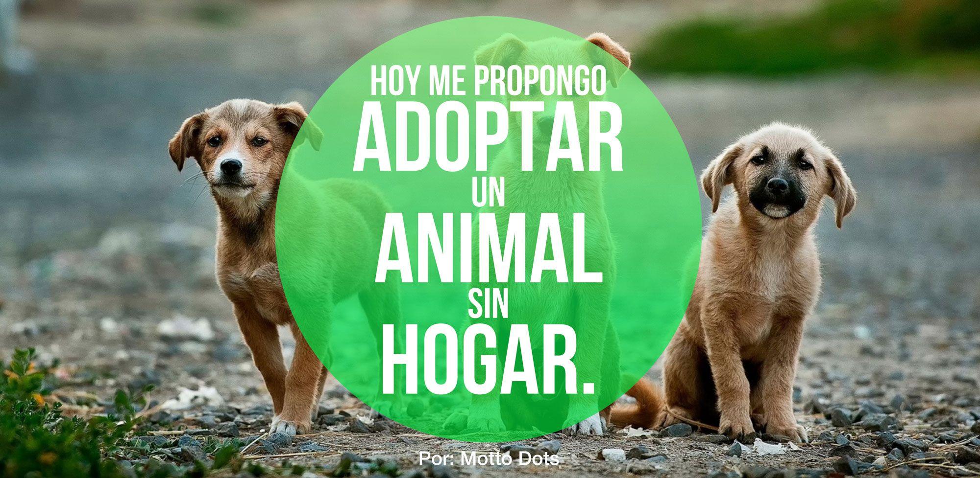 Hoy me Propongo Adoptar un Animal sin Hogar Animals, Dogs