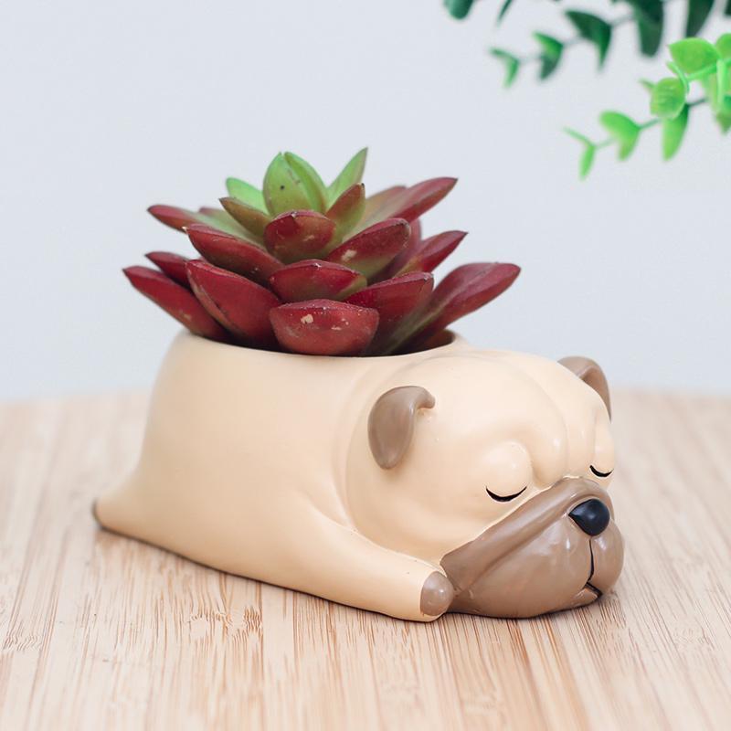 Mini Dish Garden in a glazed Dog Planter