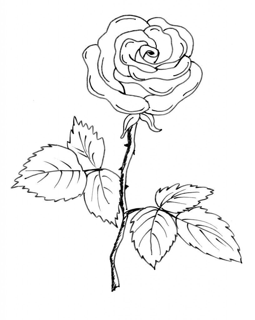 Vom Bild Zum Stickmuster Teil 1 Blumen Rosen