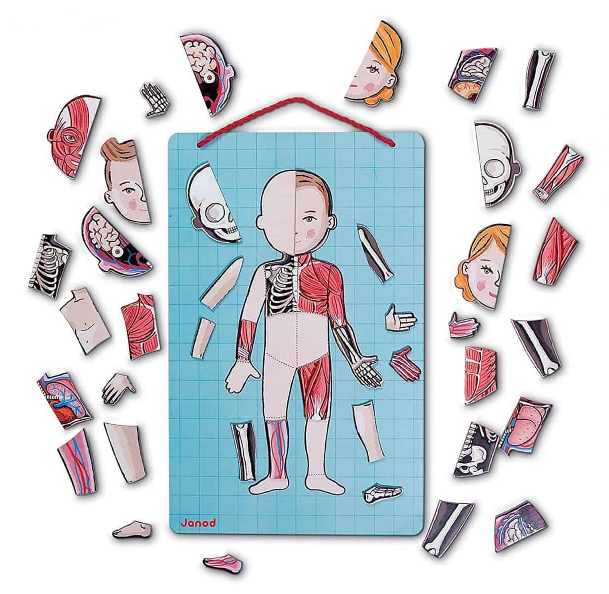10 Fun Ways To Teach Kids Anatomy Education Pinterest Teaching