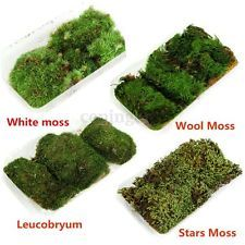 4 Types 100 Pure Natural Forest Carpet Moss Potted For Terrarium