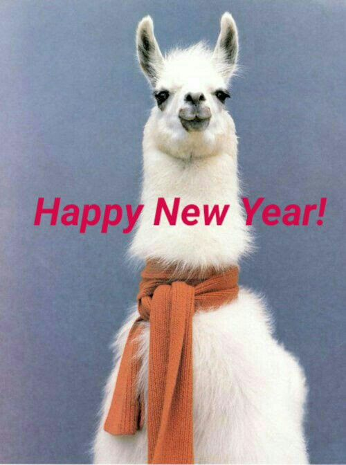 Happy New Year From My Llama To Yours Share Some