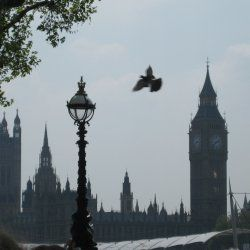 Hello visitor,  Welcome on my lens!  This lens is about a photo from London. I took this photo when I was on a journey to London with school.  I...