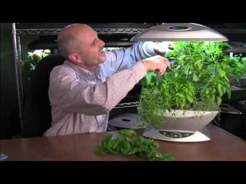 8 Week Pruning Video Series Aerogarden Blog Hydroponic 640 x 480