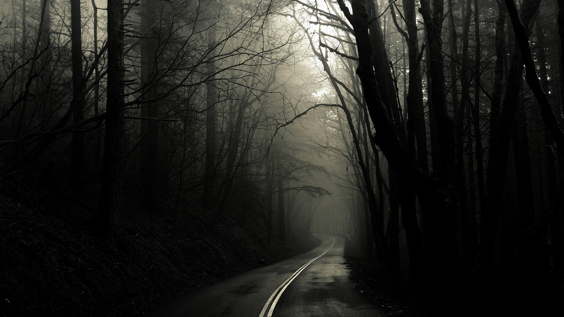 Dark Road Forest Mist Black White Wallpapers For Desktop Free