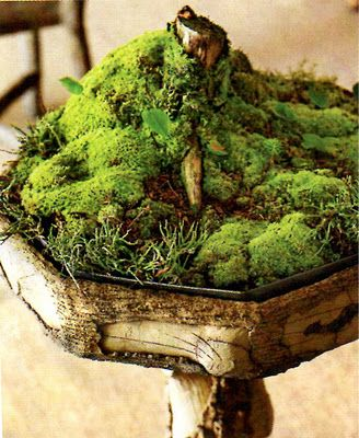 miniature moss garden - Did one a couple of years ago. It was really cute, but it didn't come back the next year.