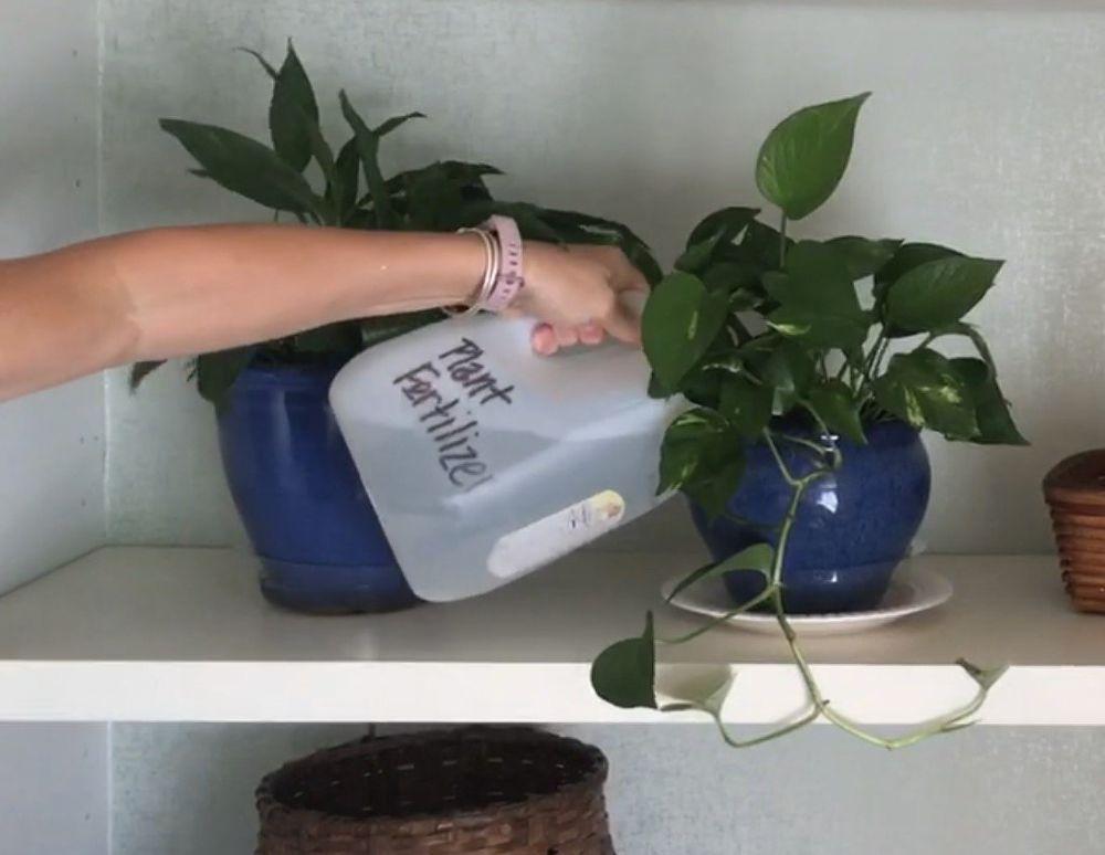 5 Tips For Healthier Plants Fertilizer For Plants Plants