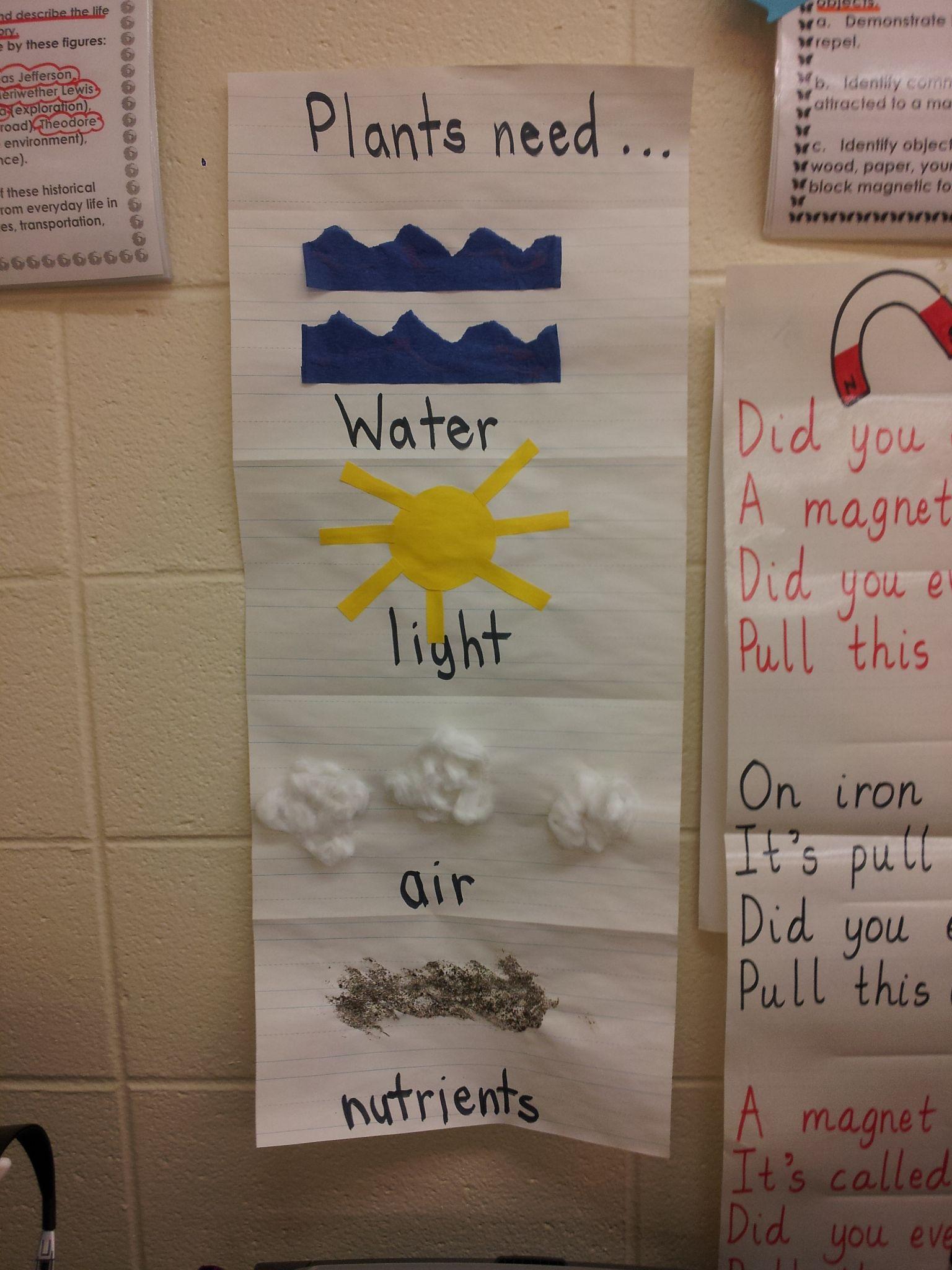 Plants Poster Taken From Mrs Googe S 1st Grade Class