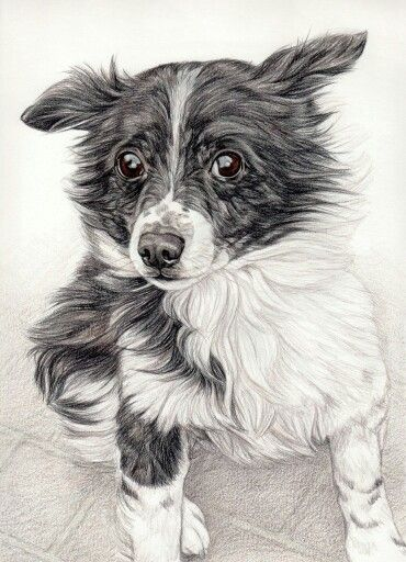 Pin Auf Drawing Animals