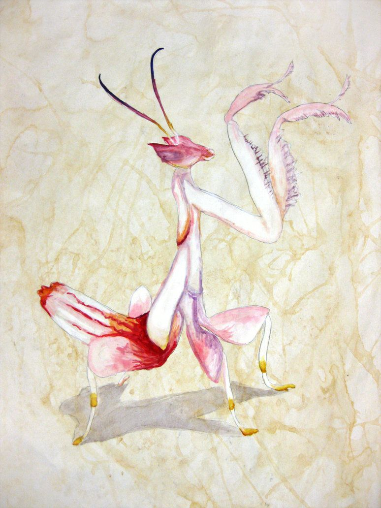 Orchid Mantis By Paintedmookers On Deviantart Orchid Mantis Orchid Wallpaper Orchid Illustration
