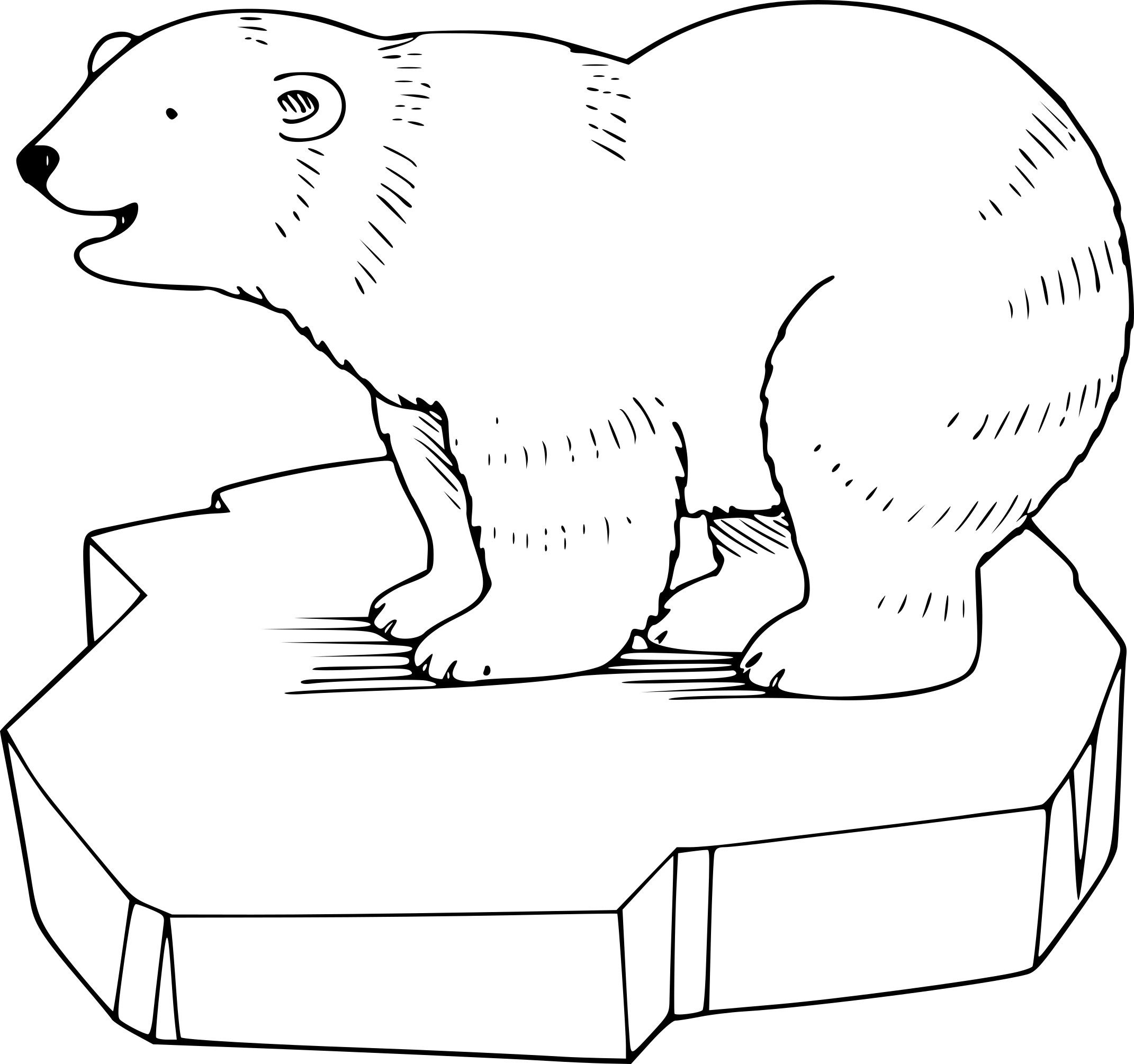 Beau coloriage a imprimer animaux de la banquise - Dessin banquise ...