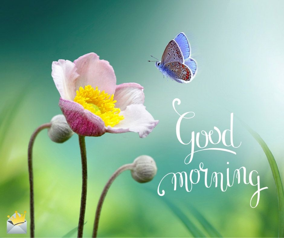 50 Good Morning Pics That Will Make Your Day Good Morning Beautiful Images Morning Pictures Good Night Image