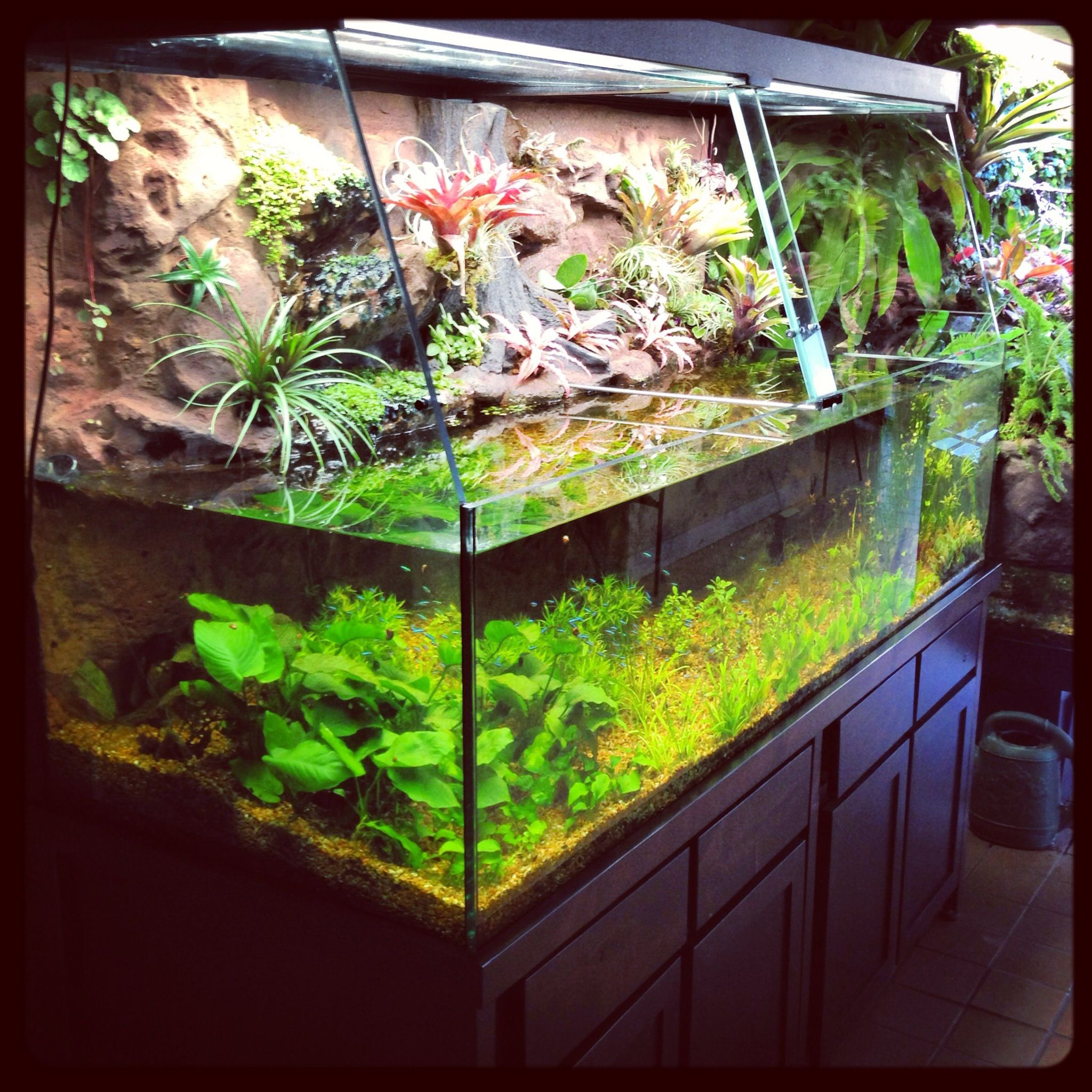Aquaplantarium a tropical oasis aquarium paludarium for Fish tank terrarium