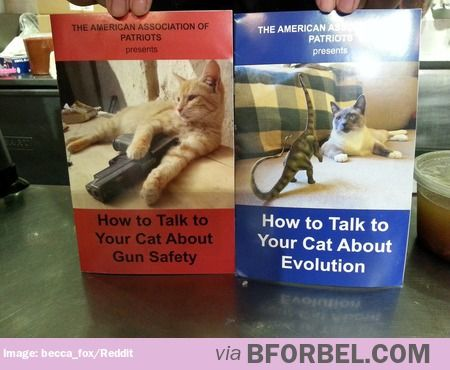 Co Worker Just Dropped These Off With No Context Really Funny Pictures Chemistry Cat Funny Memes