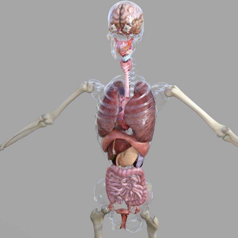 Human Female Anatomy 3d Model 3d Anatomy In 2019 Pinterest