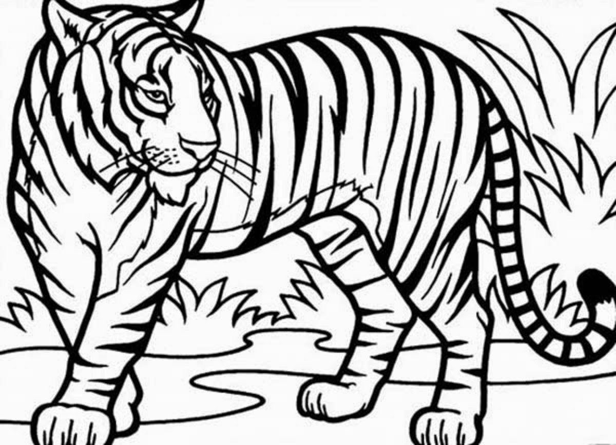Tiger Coloring Pages For Kids Tiger Drawing Coloring Pages For