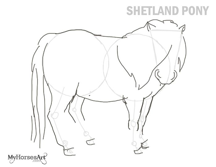 learn how to draw a shetland pony the in and