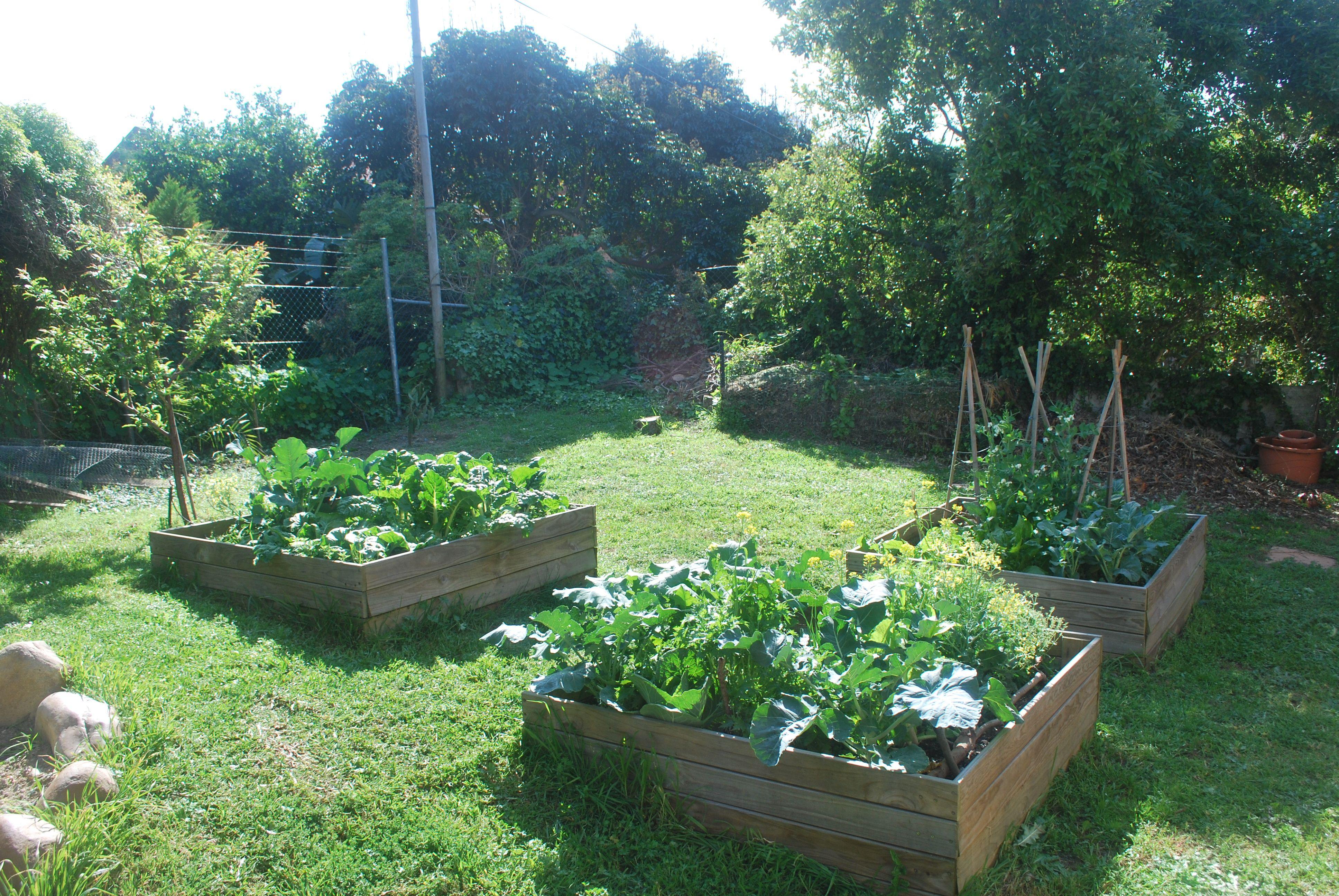 My raised vegetable beds. Veggie garden with nice winter