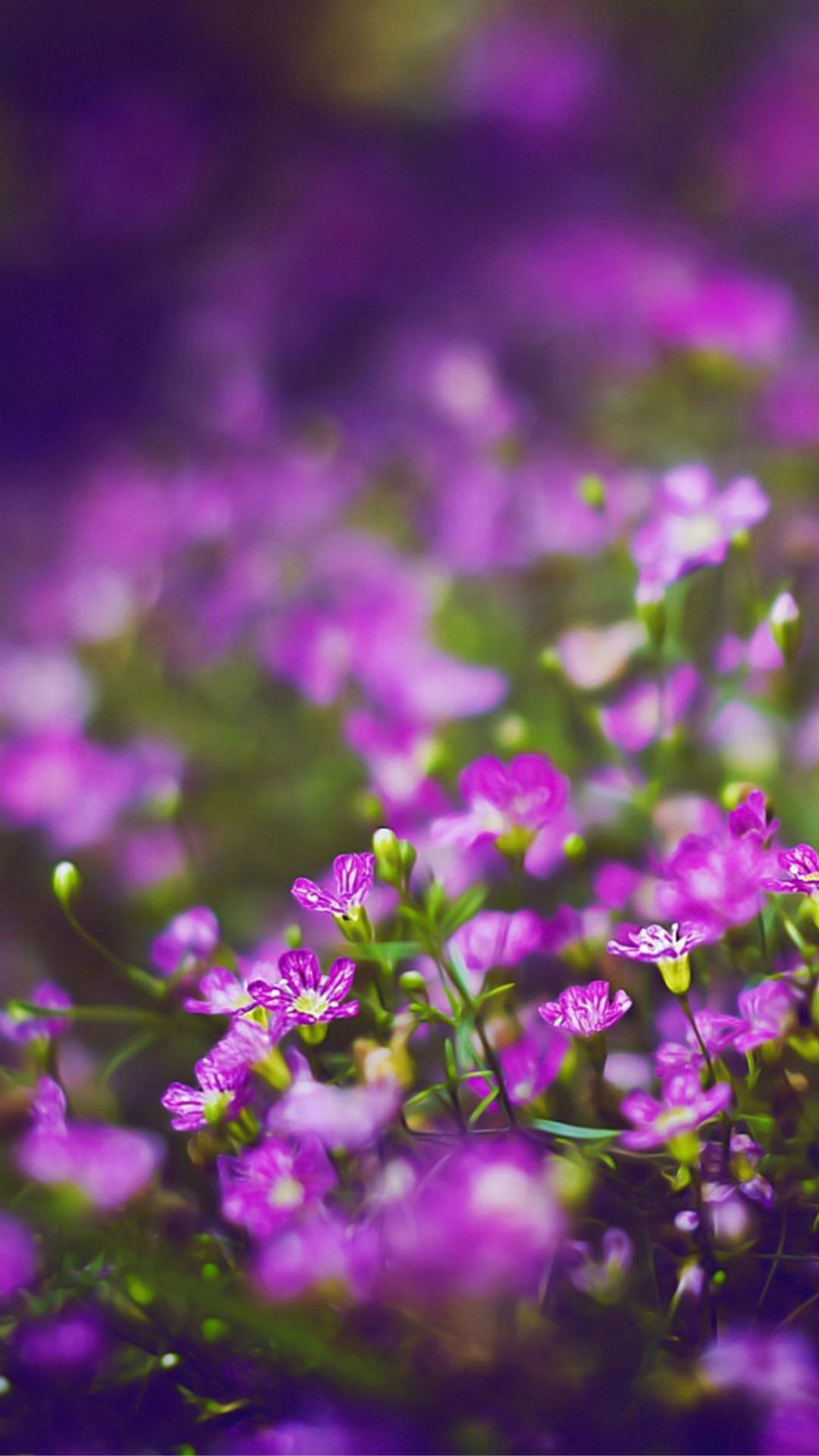 Wallpaper iphone violet - Beautiful Purple Flower Field Blur Bokeh Iphone 6 Wallpaper