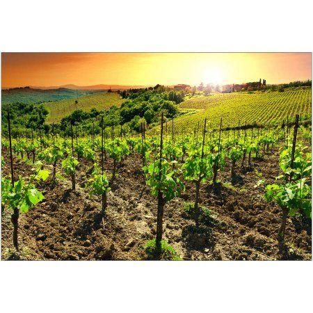 Vineyard at Sunset, Tuscany Photography by Eazl, Size: 24 x 16, White