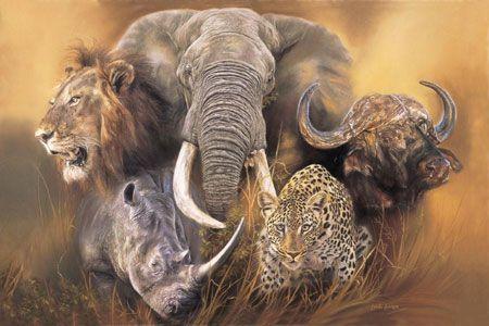 Bilderesultat For The Big Five Pictures Africa