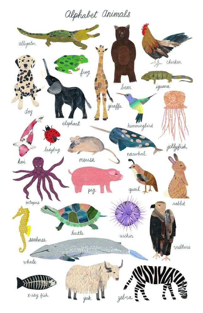 Christina Song Alphabet Animals Animal Posters Animals