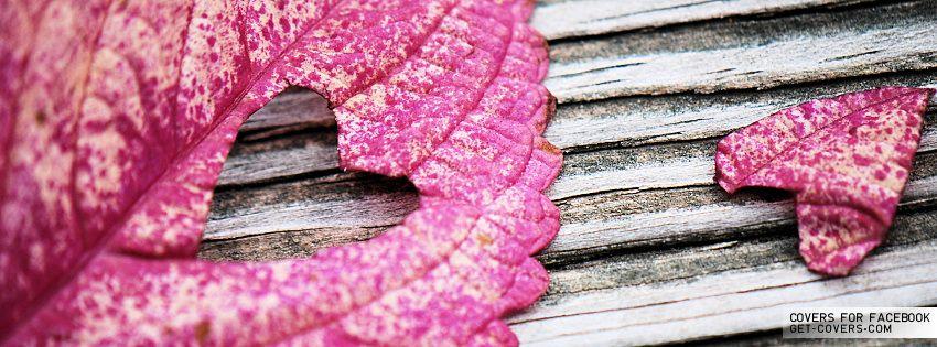 Autumn Love Facebook Covers