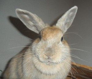 Schöne Kaninchendame