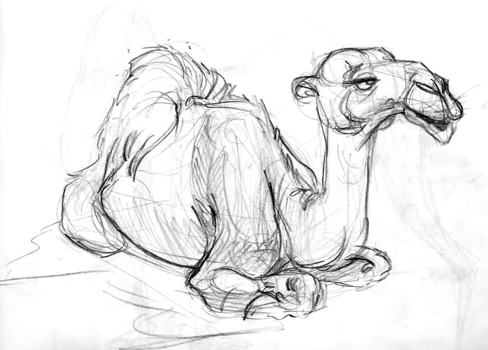 Рисунки животных наброски