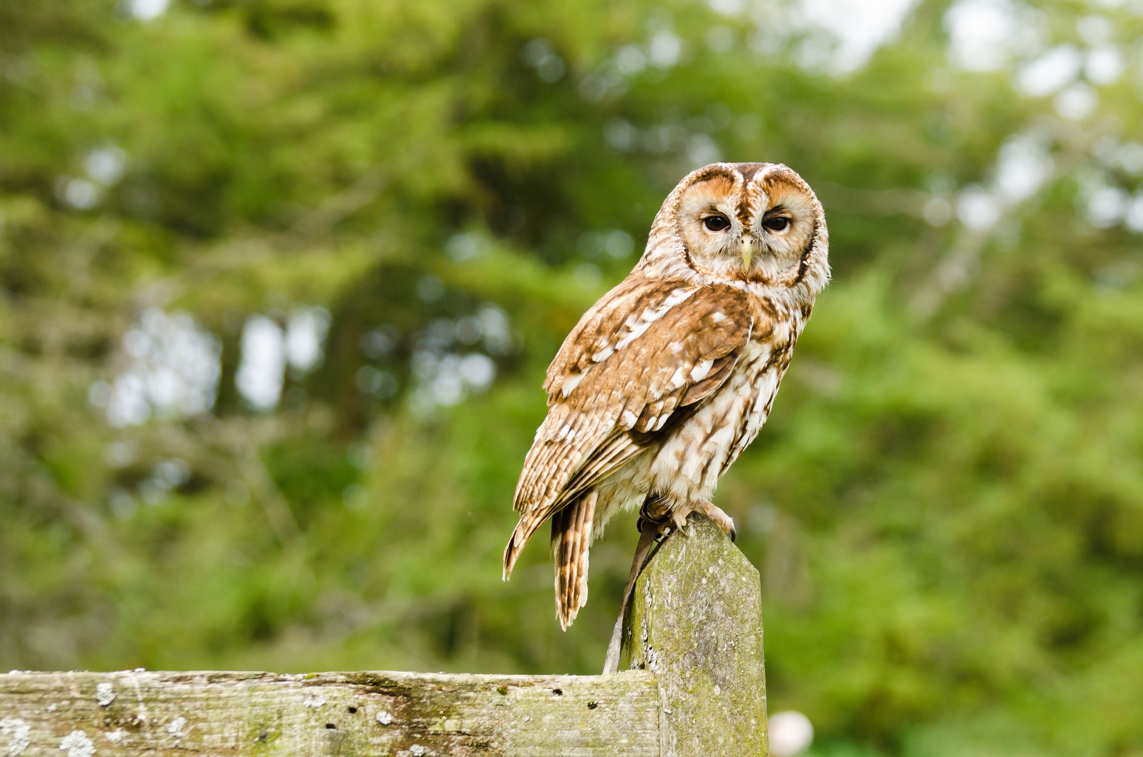 So cute. Deciduous forest animals, Forest animals, Owl