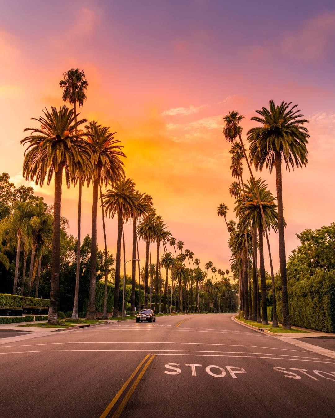 Пальмы в городе картинки