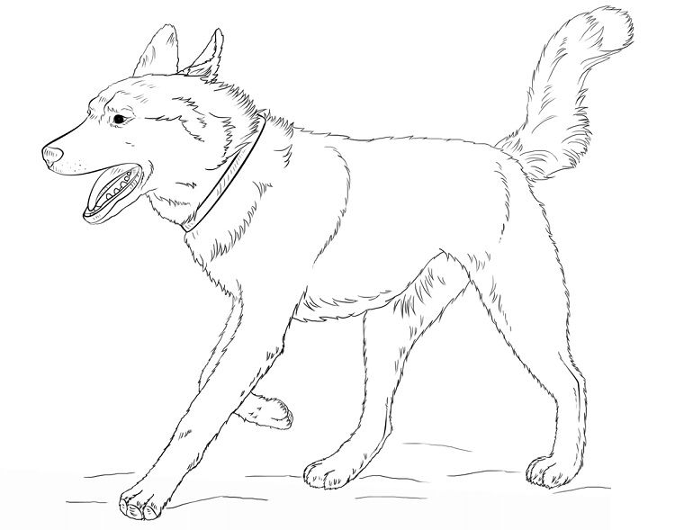 Husky Dog Coloring Pages Dog Coloring Page Horse Coloring Pages Animal Coloring Pages