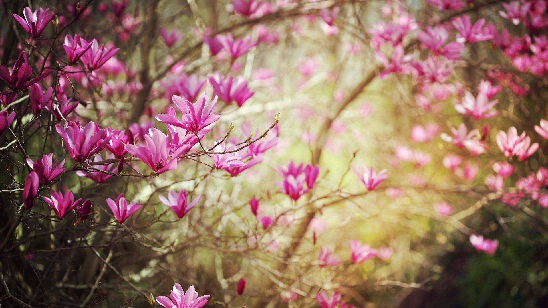 Garten Hd Fotos Herunterladen Quikeloga Ga