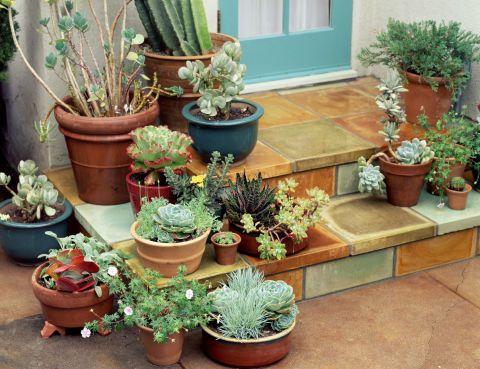 How to Start Gardening - Gardening Tips for Beginners