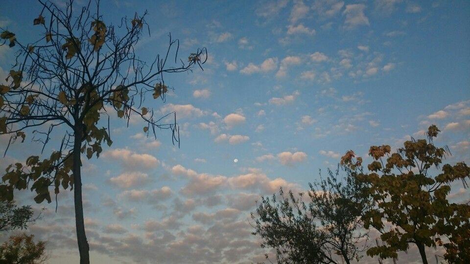 Luna mañanera entre árboles del amor