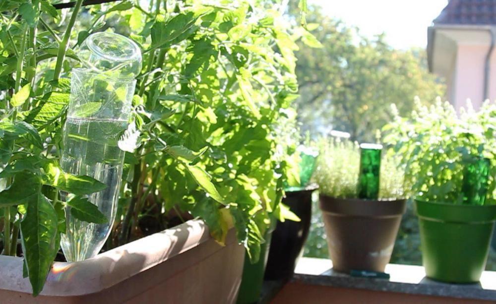 video pflanzen mit pet flaschen bew ssern garten. Black Bedroom Furniture Sets. Home Design Ideas
