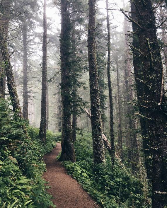 Wall Art.Forest Art Print.Wall Decor.Art Decor.Photo Print.Forest Trail.Pacific Northwest.Oregon.Rain Forest.Mist.Trees.Hiking.SEVERAL SIZES