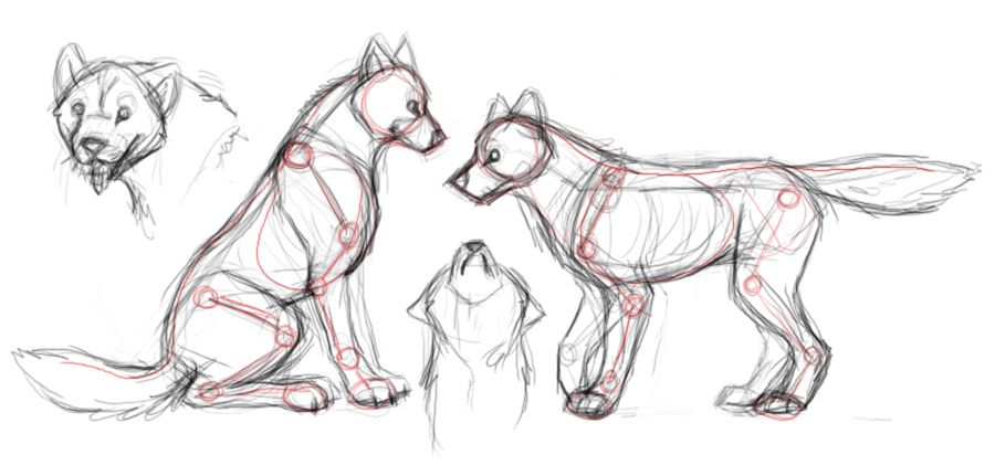 Wolf Anatomy Studies By Autumnaloneiantart On Deviantart