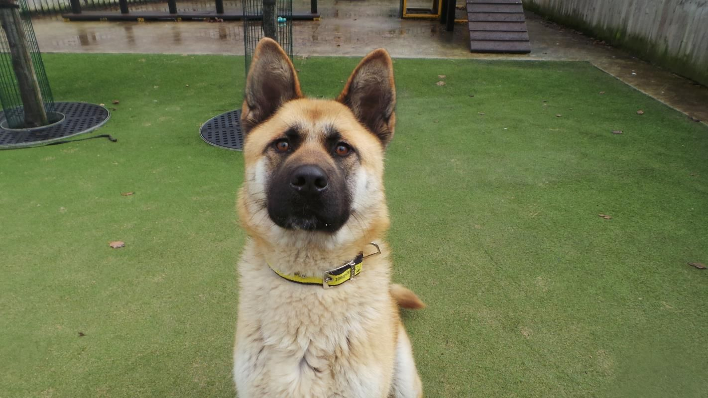 Kula is a 1 year old Crossbreed who just loves to keep