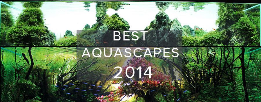 Best Aquascapes of 2014 | Aquascape, Fish tank, Marine ...