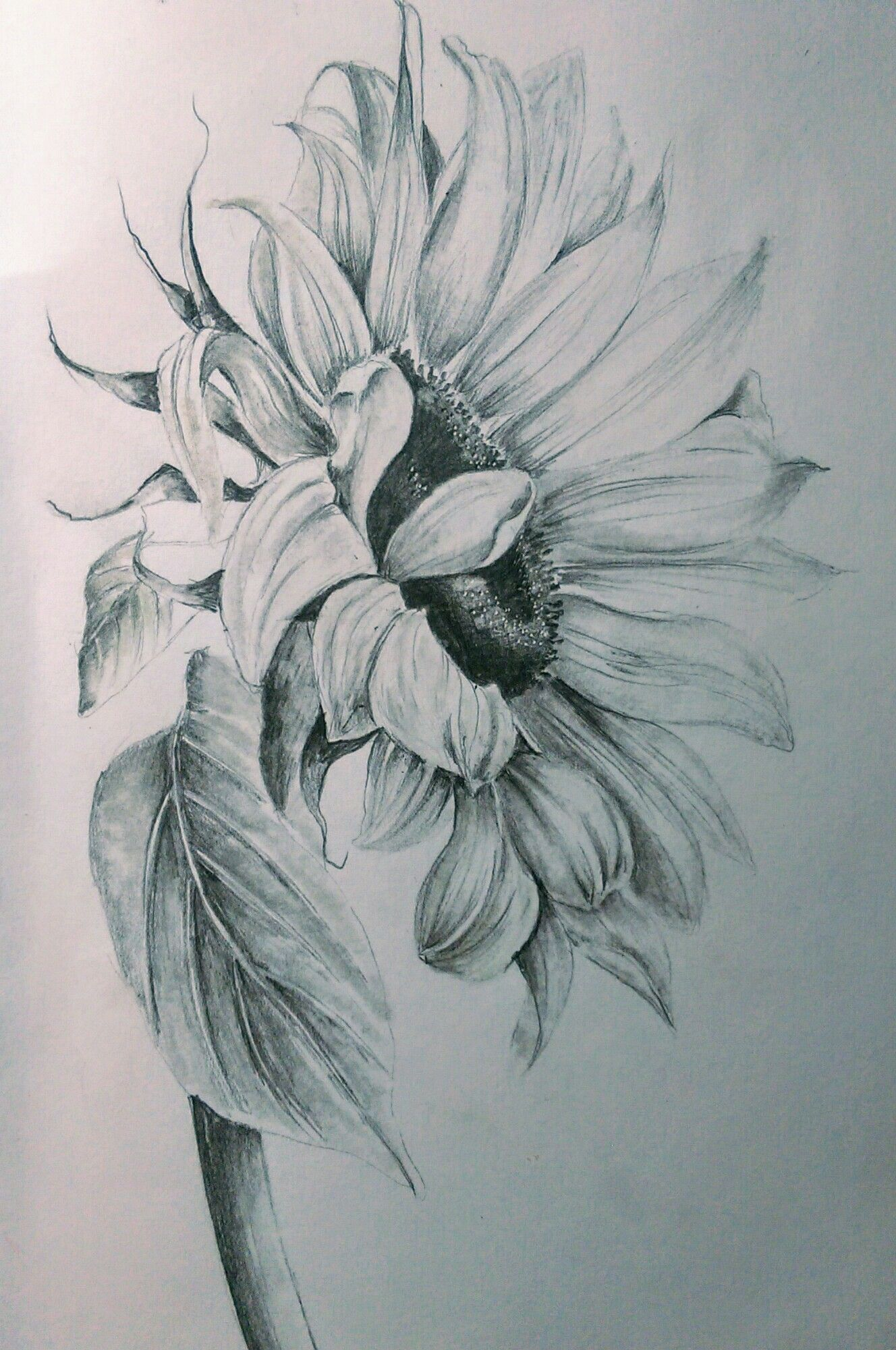 Pencils Sunflower drawing, Pencil drawings of flowers