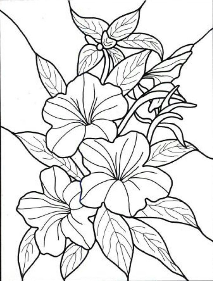 Tropical Flowers Flower Coloring Pages Printable Flower Coloring Pages Flower Coloring Sheets